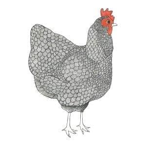 mother hen flour sack towel illustration