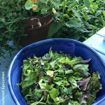 The Nourished Epicurean_Summer Greens & Broccoli Salad