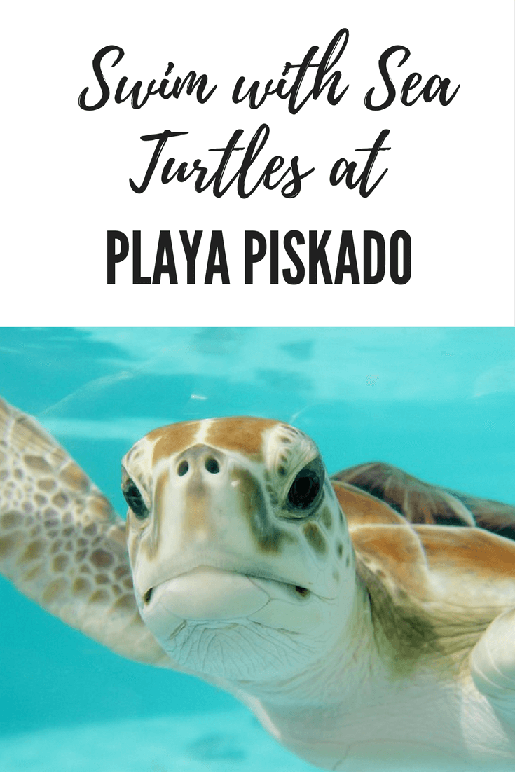 Swim with Sea Turtles at Playa Piskádo - for FREE!