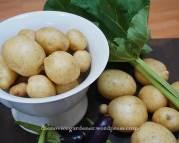 potato harvest3