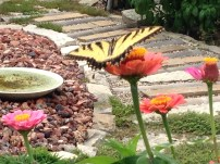 Swallowtail ready for flight
