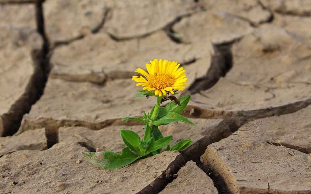 flower-cramps-blog