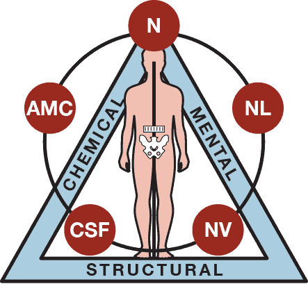 Applied Kinesiology: What Can It Help?