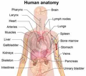 symptoms-organs