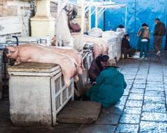 Cusco pigs