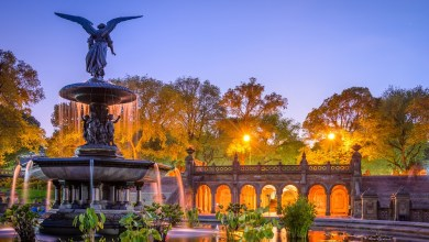 Photo of NYC Parks Need Your Help