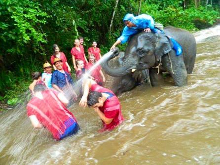 Bathing the elephants.