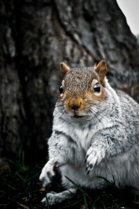 how to be a squirrel whisperer