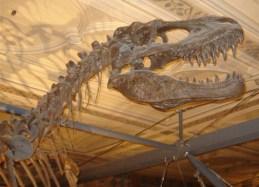 Albertosaurus_JWPhoto