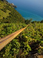 We came across these rails every so often. They must use them to cart grapes up or down the steep, steep slopes.