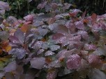 It was foggy and wet out. I loved the way this dew looked like crystals resting on the leaves.