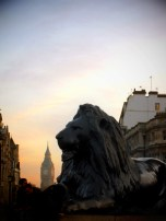 Lion looking out over Big Ben in Trafalgar Square