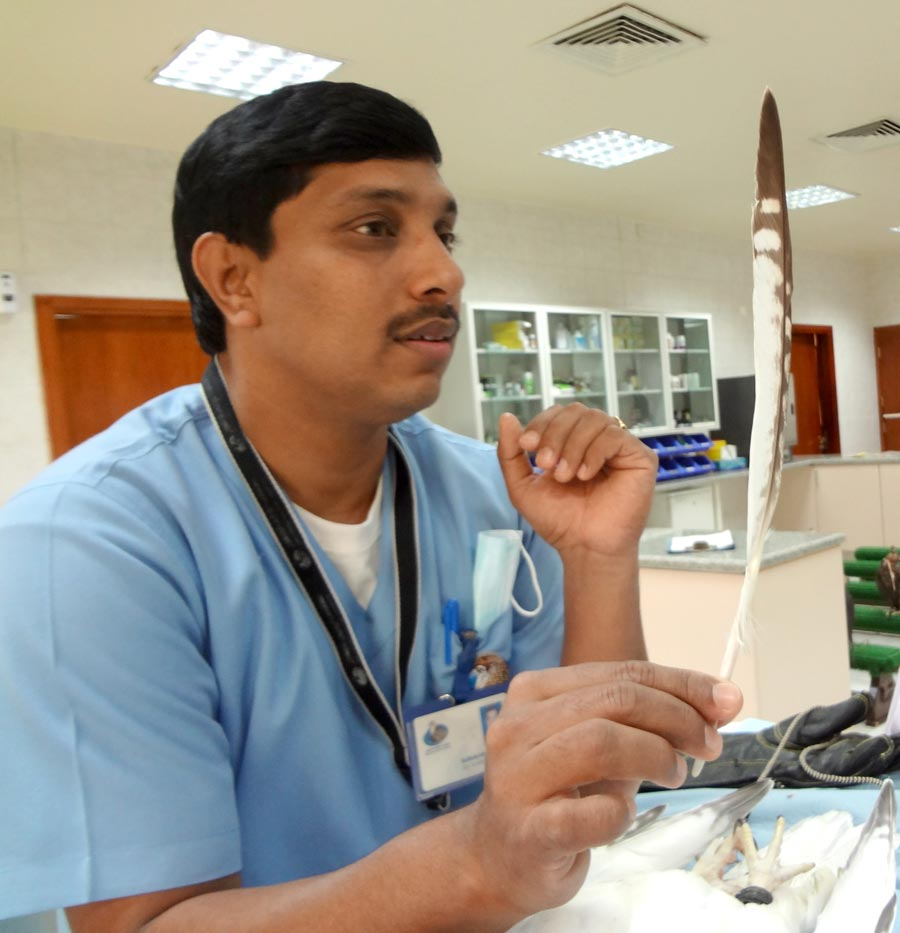 Abu Dhabi Falcon Hospital Checkup Feather