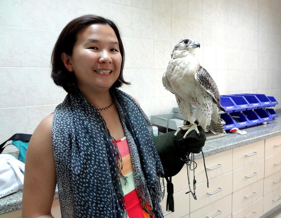 Abu Dhabi Falcon Hospital Falcon