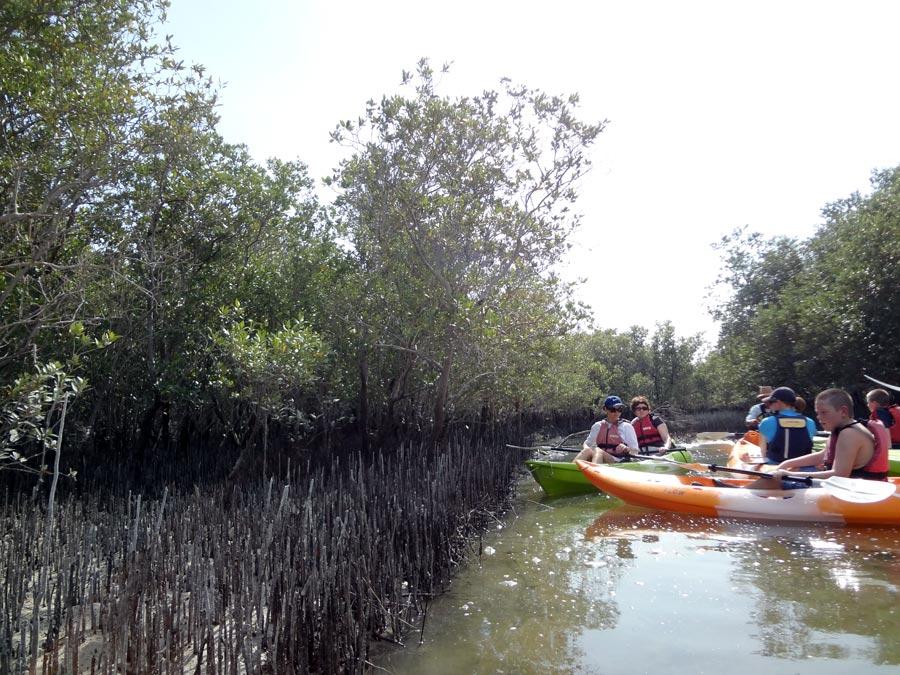 Abu Dhabi Mangrove Kayaking Channel