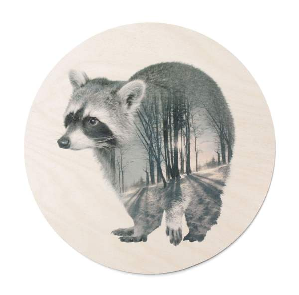 Faunascape Racoon