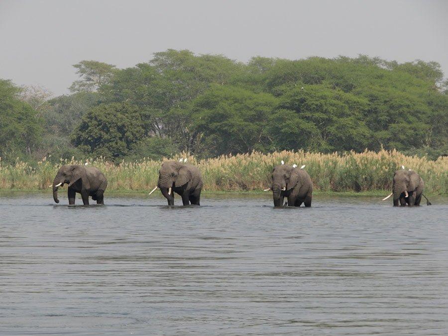 Wallpaper Wanderer: The Elephants of Liwonde National Park