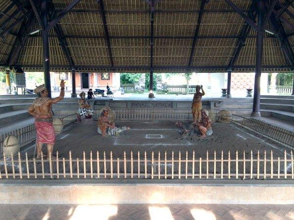 Bali Taman Ayun Cock Fighting