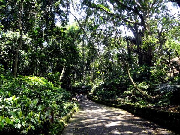 Bali Ubud Monkey Forest Foliage