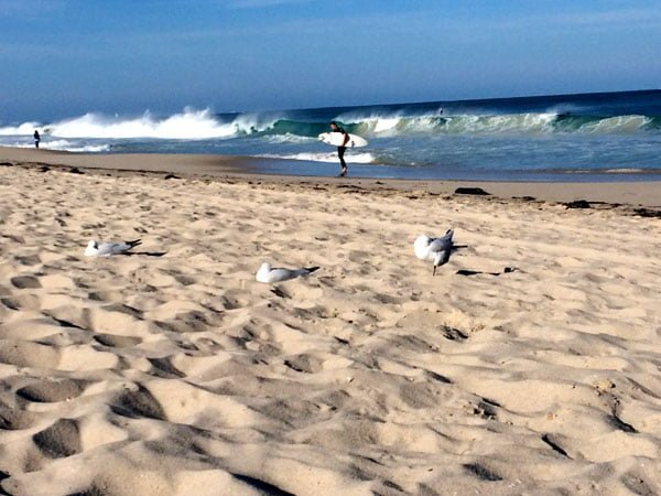 Perth Scarborough Rendezvous Beach Surf Birds