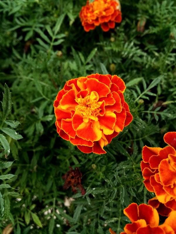 Portugal - Lisbon Flower Macro