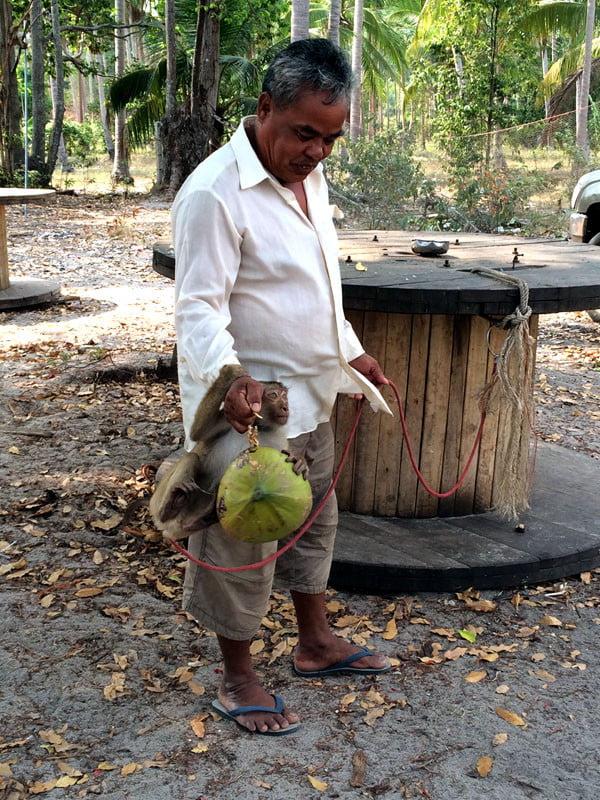Koh Samui - RNavigator Coconut Farm Monkey