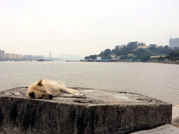 Macau Coloane Sea Sleeping Dog