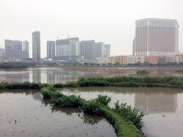 Macau Taipa Lake