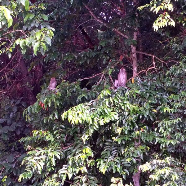 Bintan Mangrove Animals