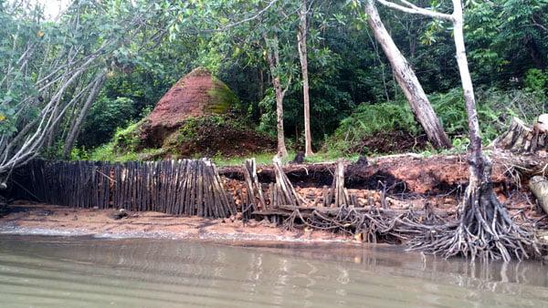 Bintan Mangrove Shore