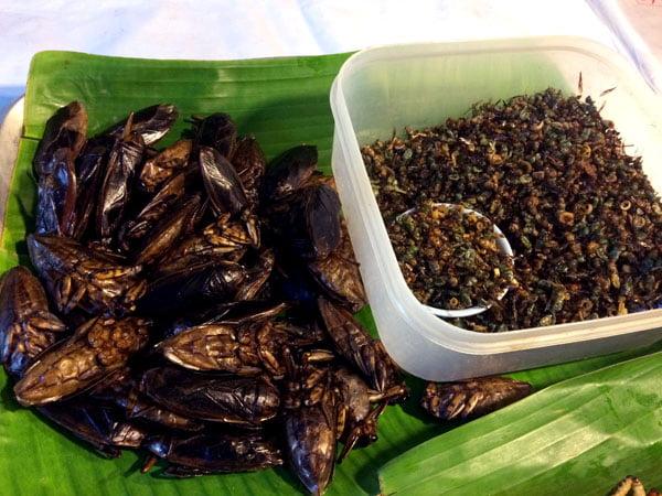 Phuket Wat Suwankiriket Market Insects Water Beetle Ants