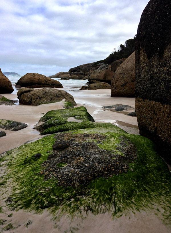 Gippsland Wilsons Promontory Squeaky Beach Green Rock