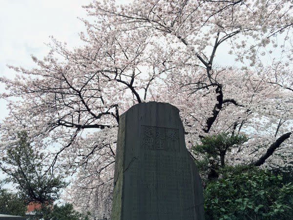 Tokyo Yanaka Sakura Tombstone
