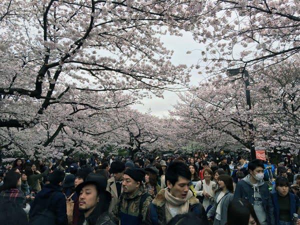 Tokyo Yoyogi Park Sakura Crowds