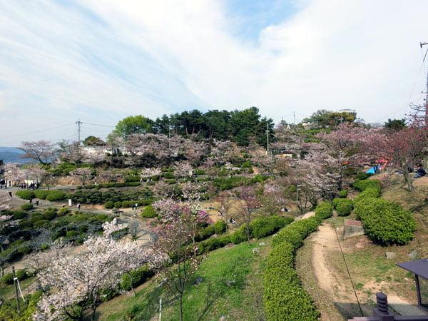 Onomichi - Senkoji Park Sakura