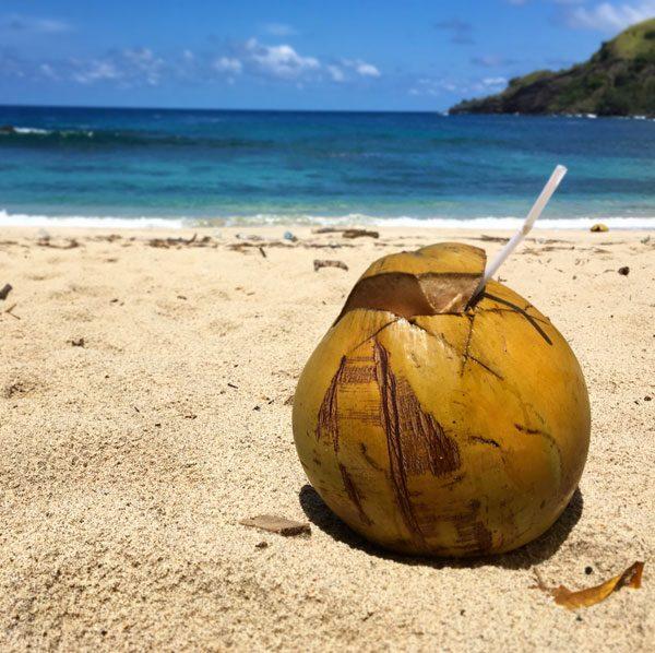 Flores Koka Beach Coconut