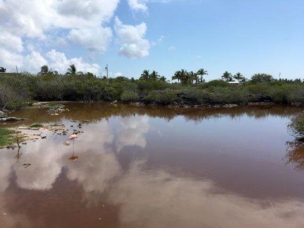 Galapagos Isabela Flamingo Lagoon