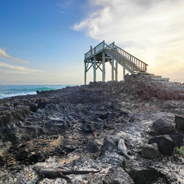 Galapagos Isabela Iguana Lookout