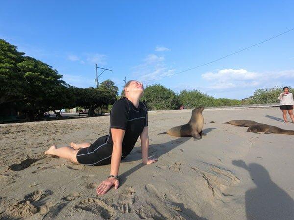 Galapagos Isabela Sealion Beach