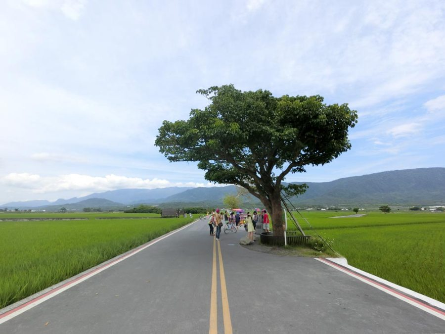 Taitung Chishang MrBrown Tree