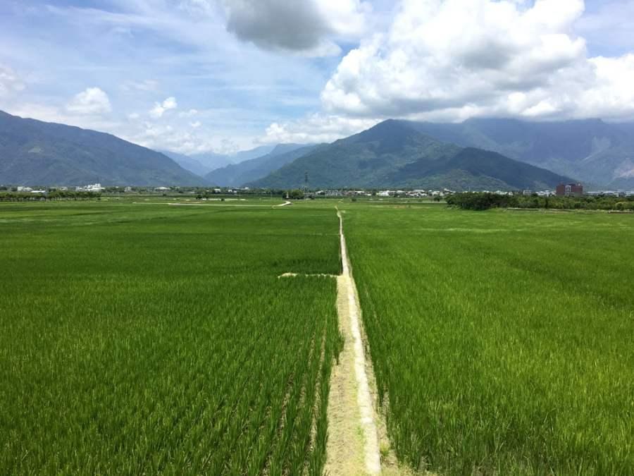 Taitung Chishang Rice Fields View
