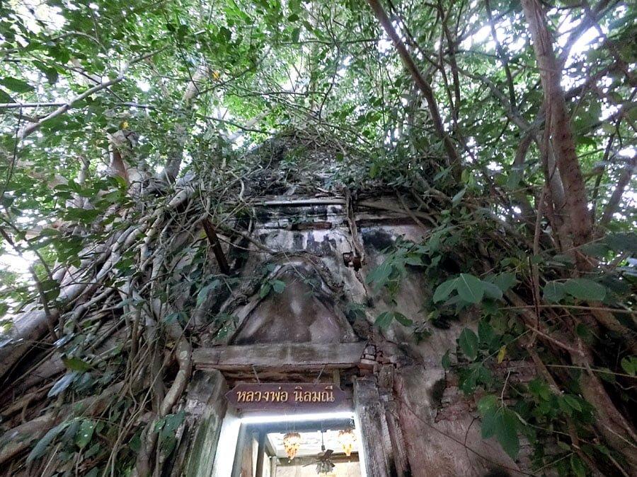 Amphawa Wat Bang Kung Banyan Tree Temple Up
