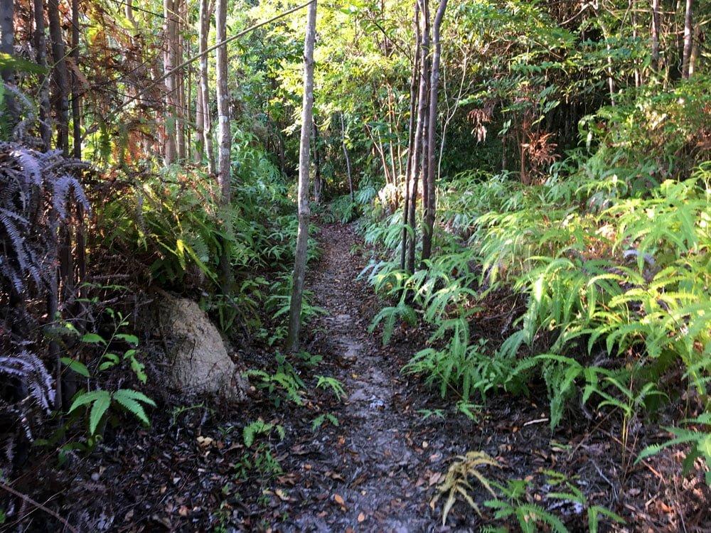 Telunas Private Island Jungle Path