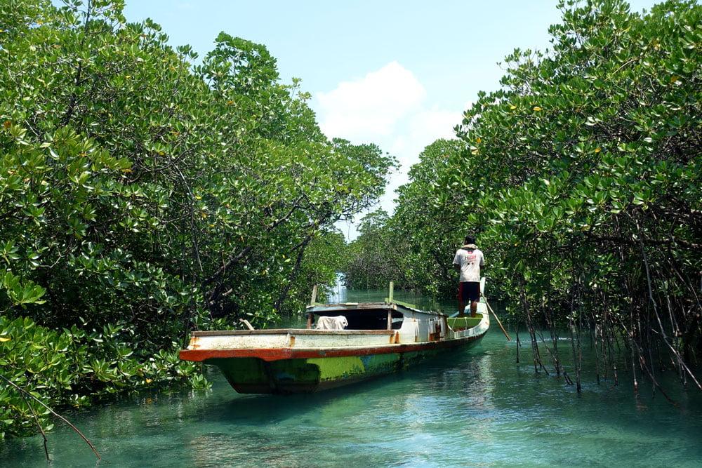 Belitung Sandbar Island Mangrove