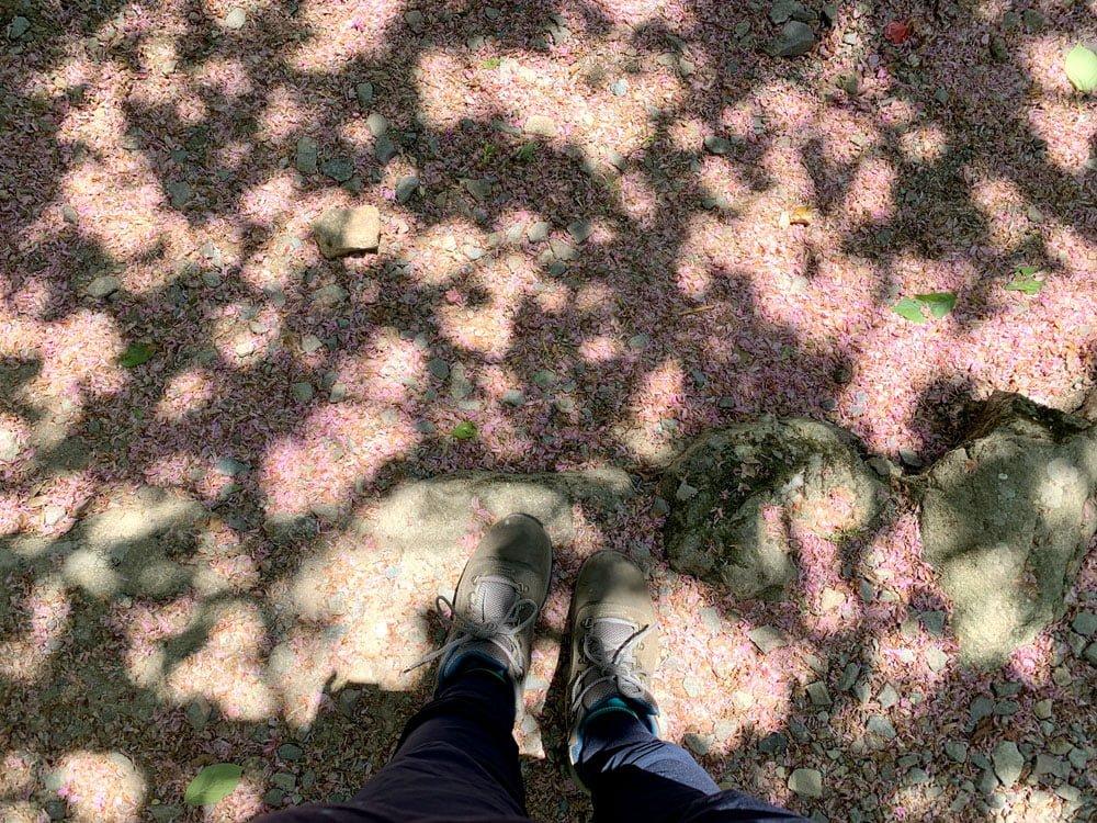 Suncheon Seonamsa Fallen Sakura