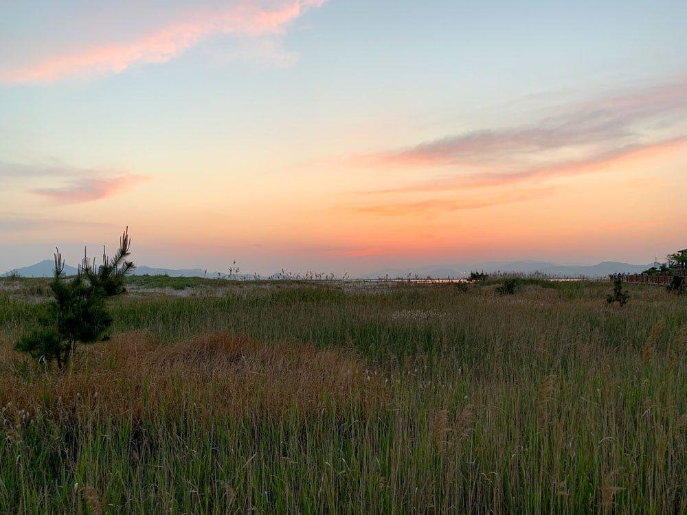 Busan Dadaepo Beach Reeds Sunset