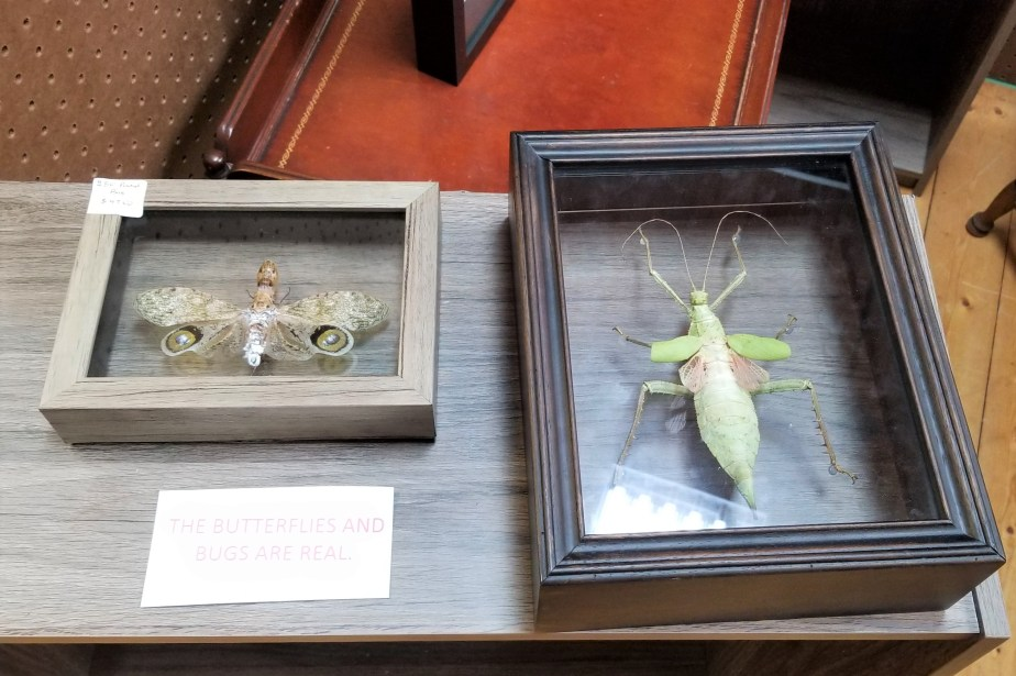 insect specimens antique barn abingdon virginia