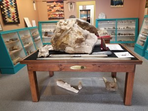 stegomastadon skull at geronimo springs museum
