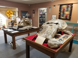 prehistoric skulls at geronimo springs museum truth or consequences, nm