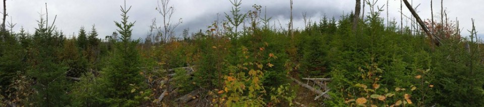 The Off Grid Cabin Build Site Land Yet To Be Cleared